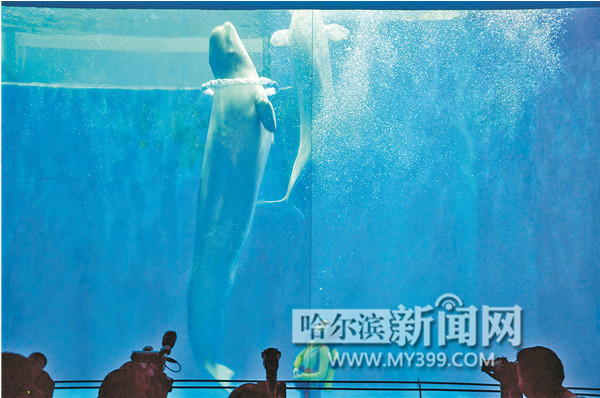 Shows in Harbin Polarland